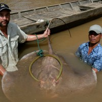 NGCI  MegFish – IBMS: #020606
